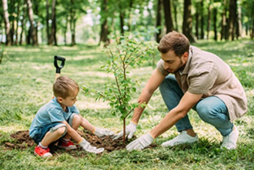A man an his young son plant a tree outside.